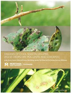 Diseases of Cool SEason Legumes (Pulse Crops: Dry Pea, Lentil and Chickpea) EB0207