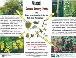 Wanted! Common Barberry Plants TriFold 4599