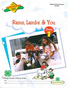 4-H Rams, Lambs & You - Sheep 1 BU6367