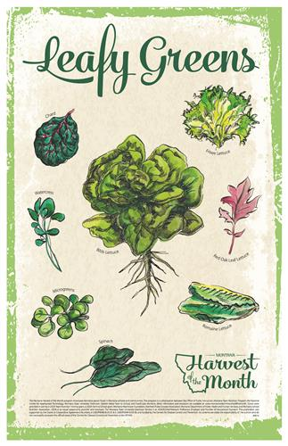 Harvest of the Month: Leafy Greens Poster  4616