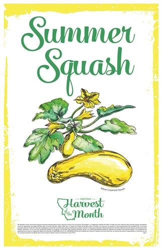 Harvest of the Month: Summer Squash Poster  4617