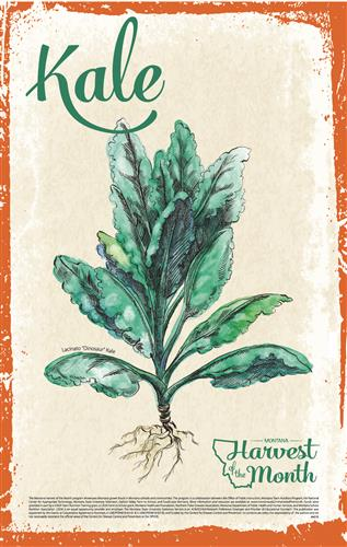 Harvest of the Month: Kale Poster  4618
