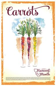 Harvest of the Month:Carrots Poster  4621