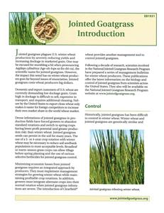 Jointed Goatgrass Introduction 4458