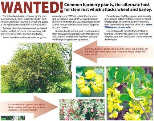 Wanted! Common Barberry Plants Poster 4600