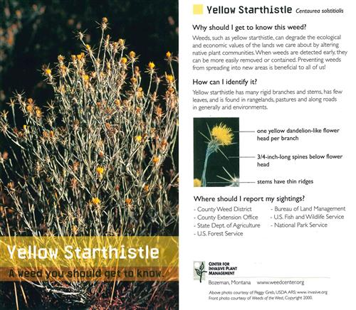 Yellow Starthistle cards (pkg of 10) 4478